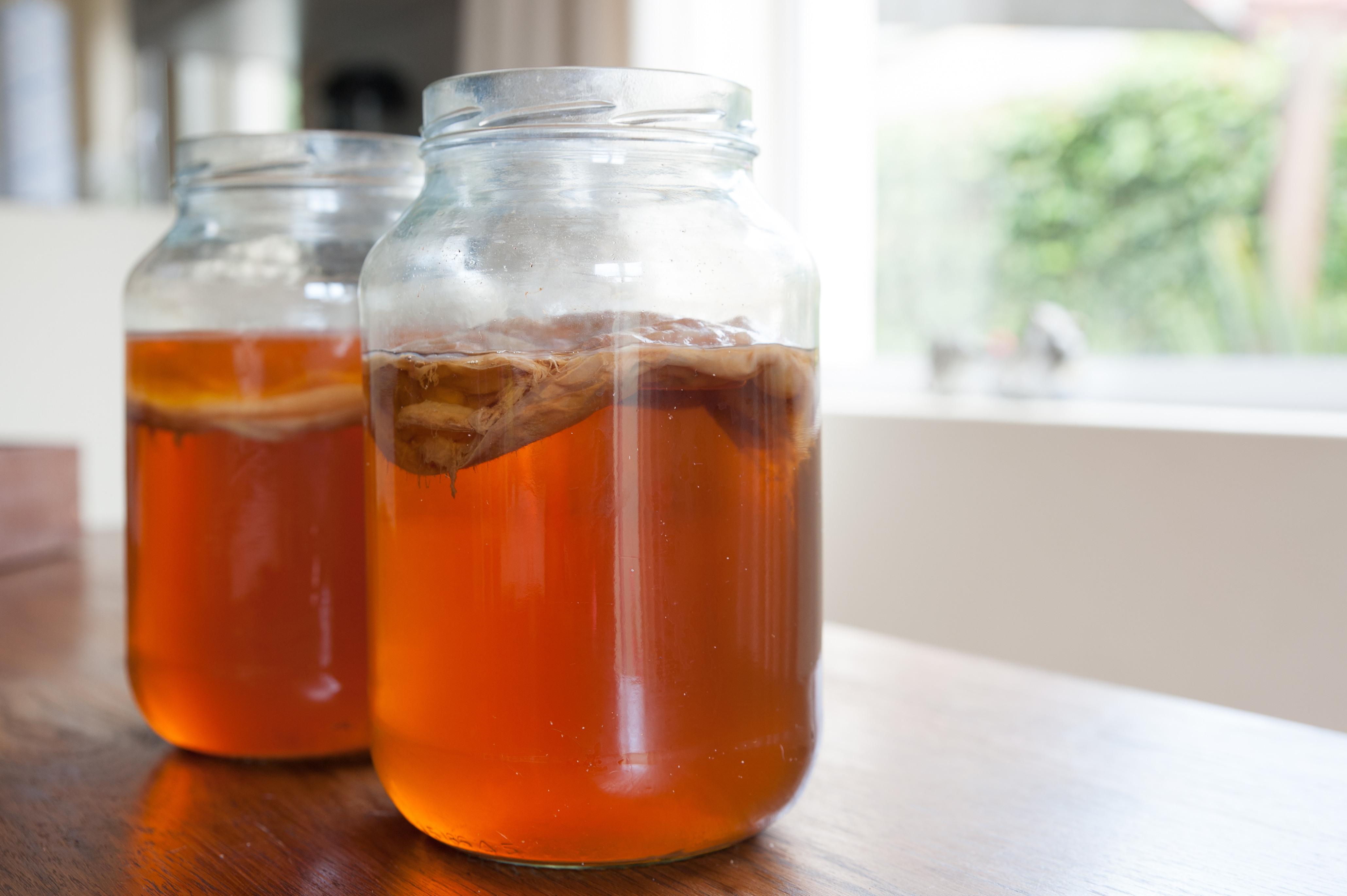 Fermentering - kombucha