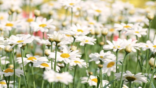 Hur vacker kan en trädgård vara med JohnTaylor