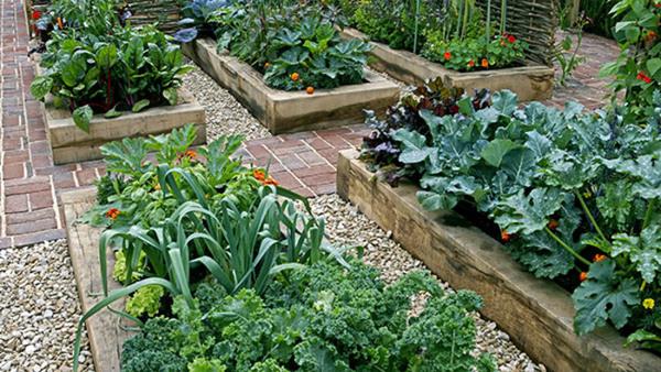 Odling och växtkunskap