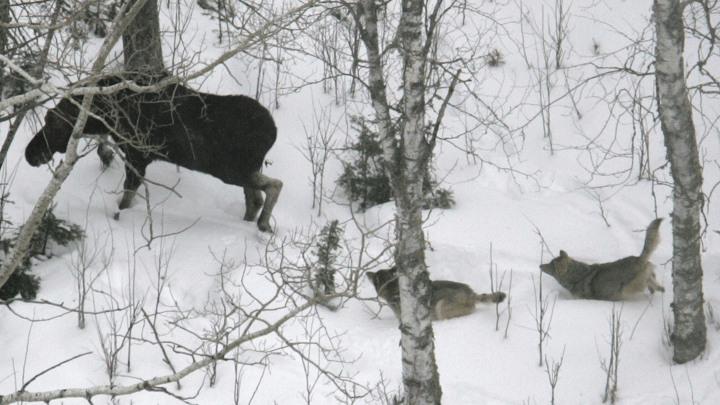 Jakt och rovdjur