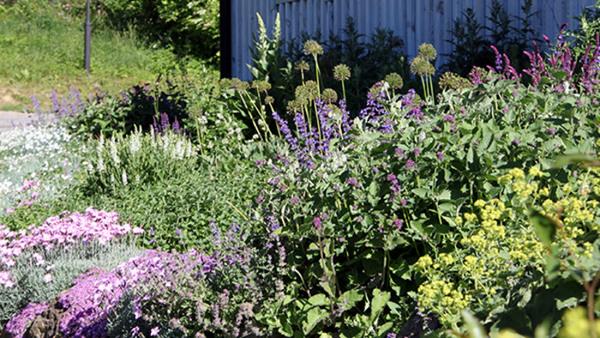 Perenner i trädgården - ger skönhet hela säsongen