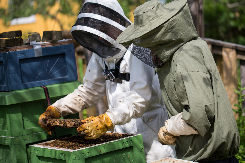 Biodling, grundkurs - onsd