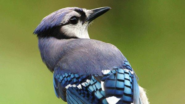 Föreläsning Expertlunch: Fåglar
