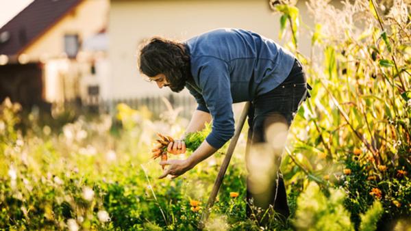 Trädgård - formge, odla och sköta