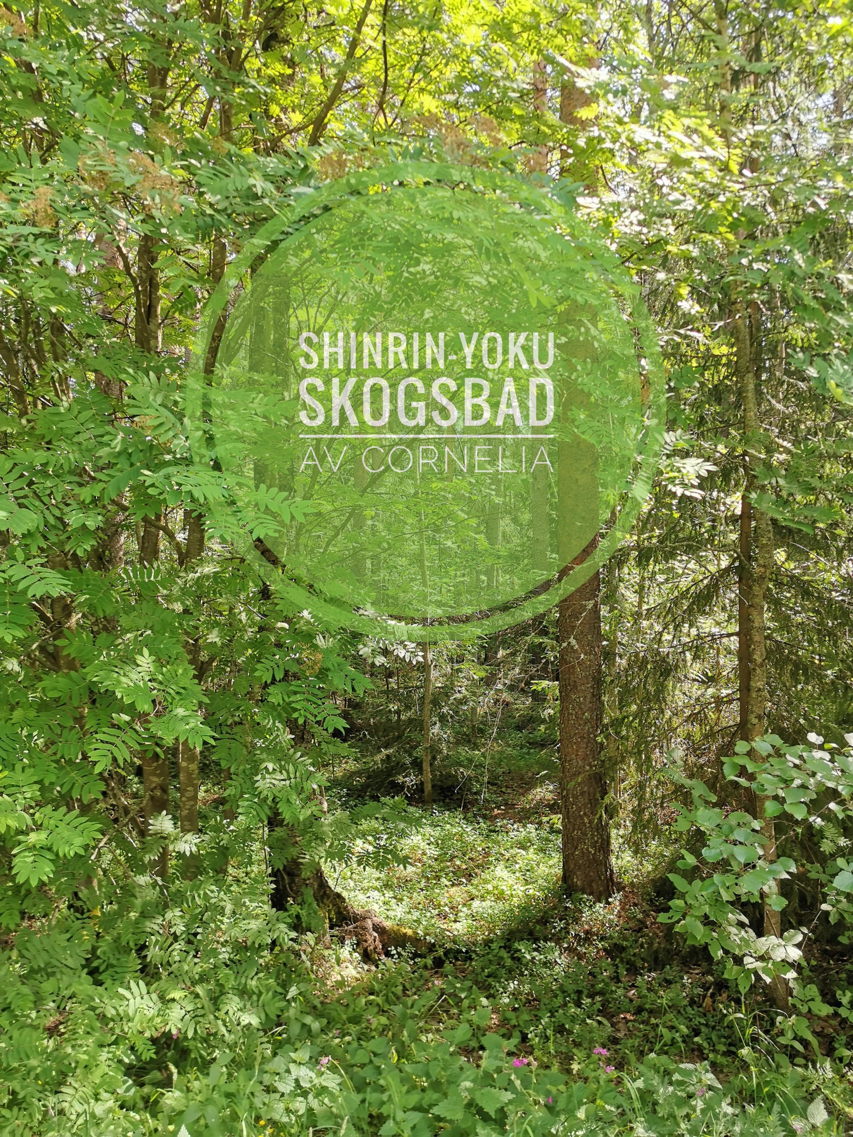 Workshop i skogens hälsoeffekter med Cornelia Lohf