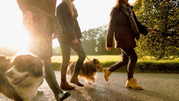 Att leva med hund–relationer känslor kommunikation