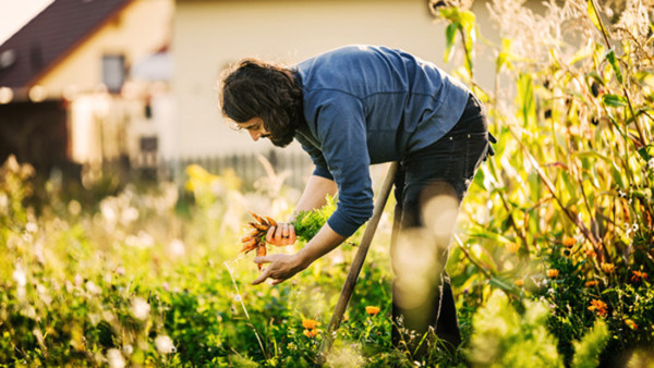Matens miljöpåverkan och mina matvanor