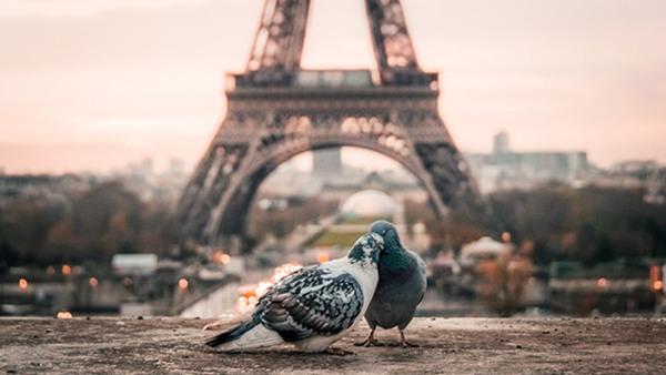 Franska inför resan