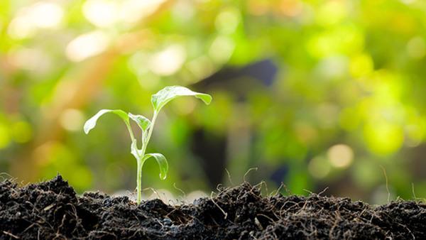 Odla en köksträdgård utan trädgård – del 1