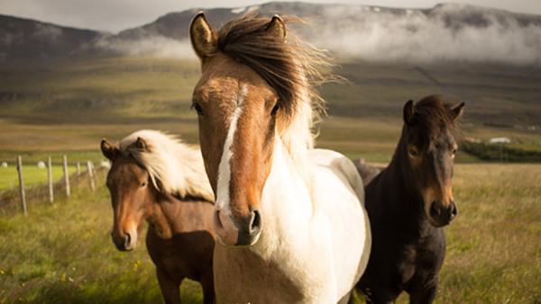 Djur, natur och psykisk hälsa