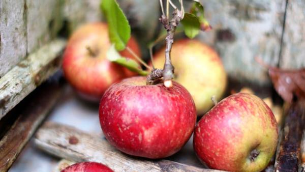Fermentering - Fruktkimchi - Nyhet!