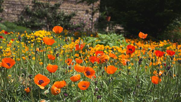 Pollinerande insekter i staden och på landet