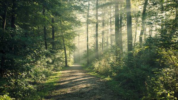 Föreläsning: skogsbygdens ålderdomliga landskap